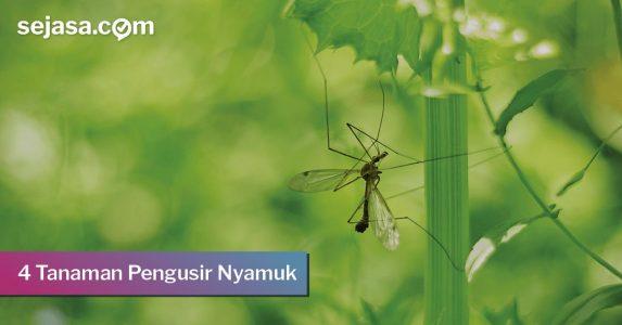 Ampuh! 4 Tanaman Pengusir Nyamuk untuk Rumah Anda!