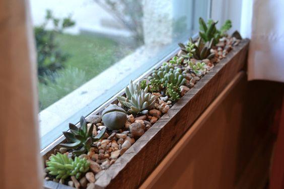 Trik Penempatan Dekorasi Kaktus Yang Kian Digemari Happy