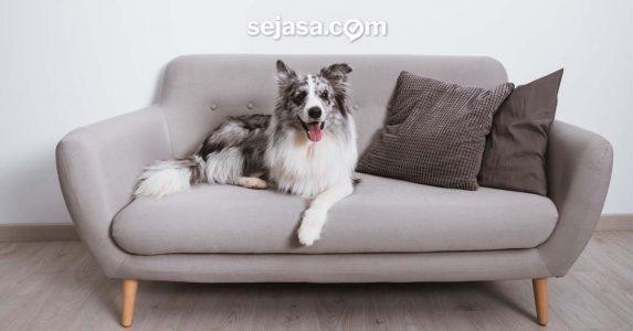 Cara Merawat Sofa agar Berumur Panjang